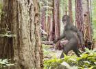 Rep. Humphrey bill would open Bigfoot hunting season